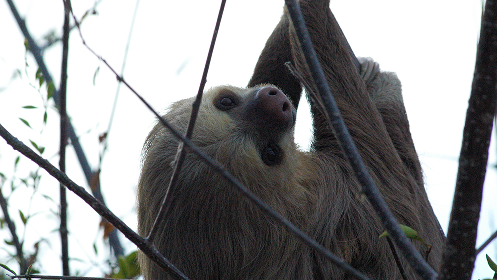 We loved seeing the sloths - they look so endearing and so vulnerable